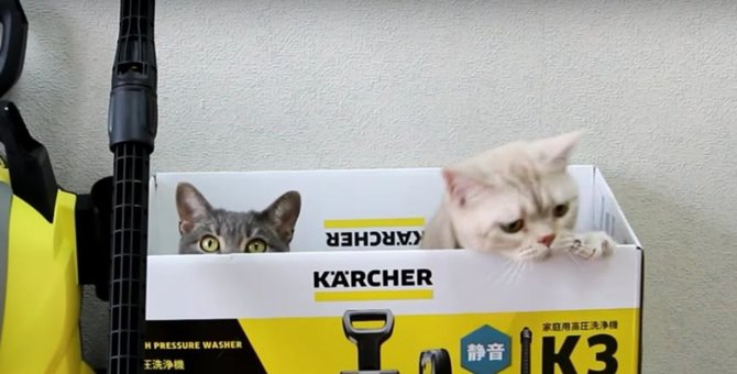 箱の中からひょっこり!猫ちゃんと一緒に高圧洗浄機を開封してみた♪