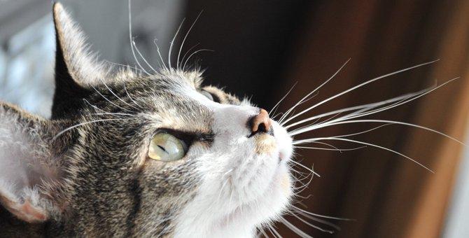 猫の『ヒゲ』が動いている時の気持ち4選