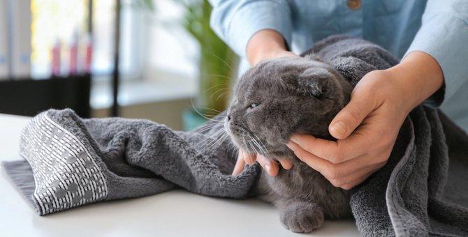 猫のドライシャンプー10選!老猫や水嫌いな猫におすすめな商品をご紹介