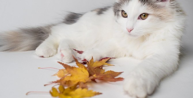 猫に絶対与えちゃダメな『秋の食材』3つ
