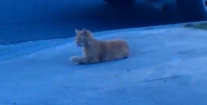 猫にしか見えない?!エアーペロペロする猫ちゃん