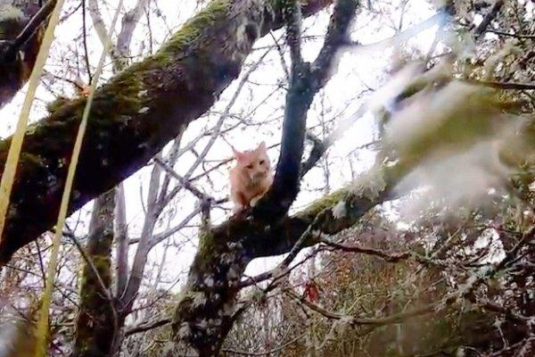 木の上でびしょ濡れになった猫…救助の手に歩み寄る姿に涙