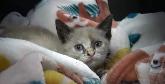 同日に別々の緊急依頼で保護された2匹の子猫。引き裂かれた運命…