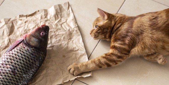 猫に『生で』与えてはいけない食べ物4つ