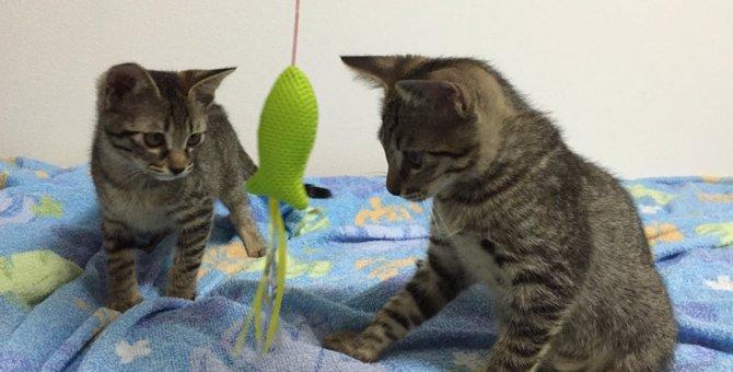 猫の譲渡会にはいろんな出会いがある「買わず飼う」という選択
