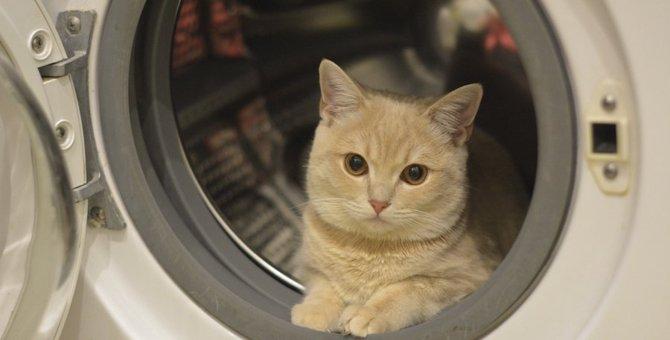 猫が洗濯機で事故を起こす!入ってしまう心理や予防の方法