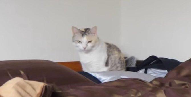 ついに猫ちゃんがロフトベッドに帰ってきた?!