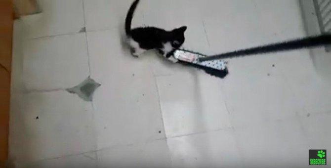 掃除を手伝って(?)くれる子猫が可愛い件