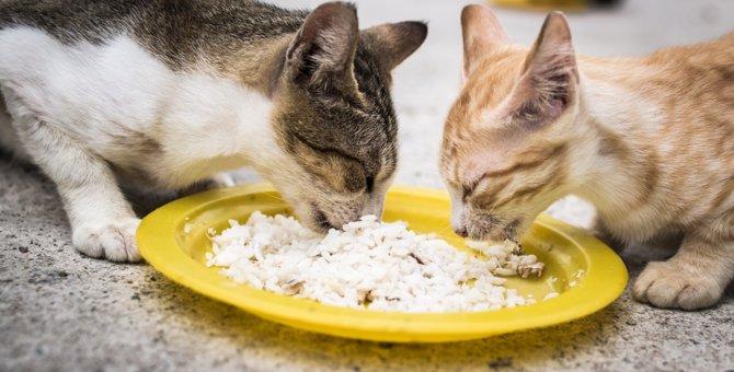 野良猫に餌付けすることの賛否と守るべきマナー