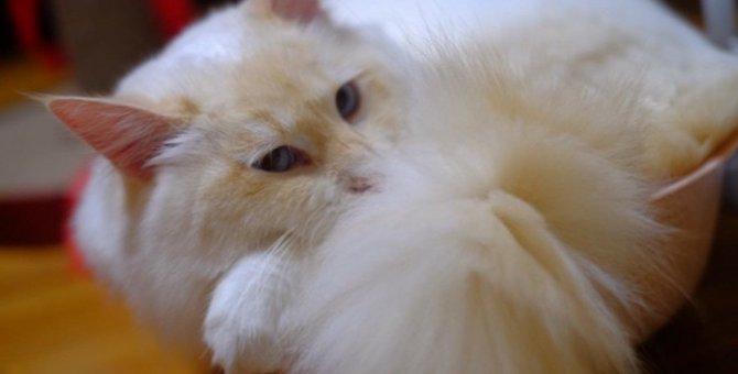 猫が目を開けたまま寝てる!?放置して大丈夫?