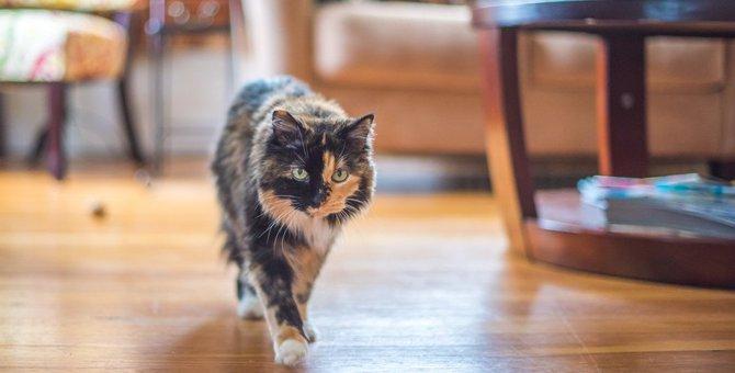 猫の『歩き方がおかしい』?異常を感じたら疑うべき15の病気と対処法