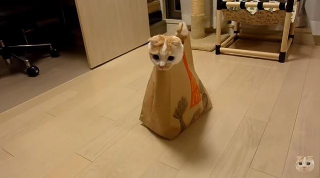 見つけられるかニャ?紙袋を使ったニャンコのかくれんぼ♪