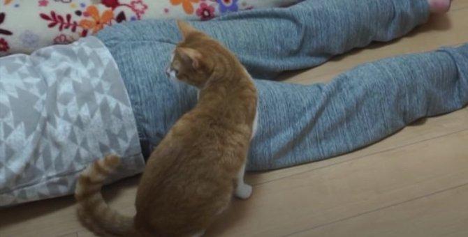 遊んでいる途中に飼い主が倒れたら猫ちゃんはどうする?!