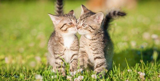 猫がキスをする意味について