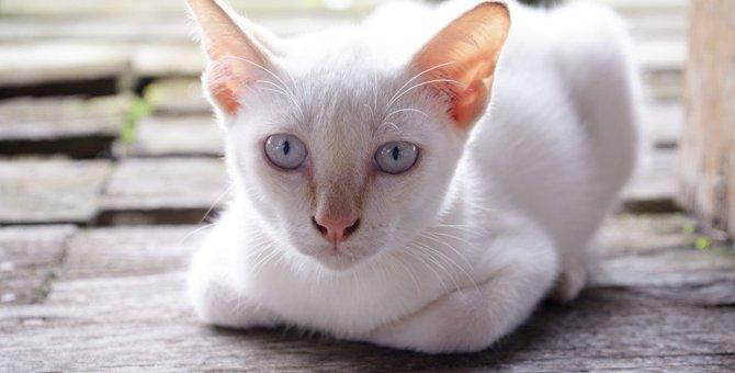 猫に軽蔑されてしまう飼い主の行為5つ