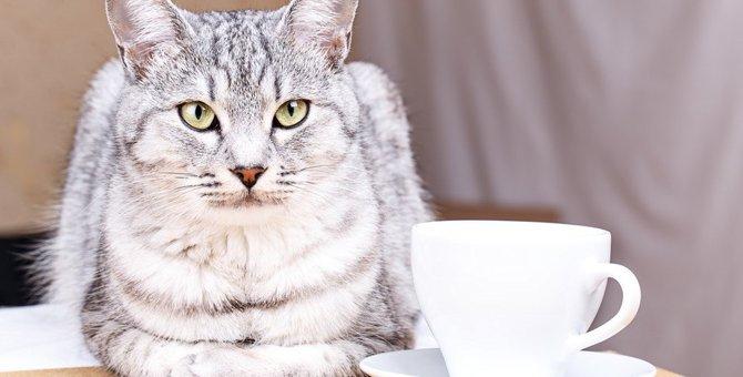 猫の寿命を縮める『危険な飲み物』3選!中毒の症状や対処法とは?