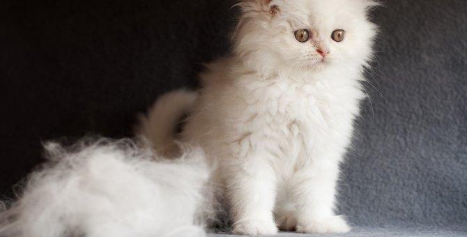 猫の抜け毛対策4選