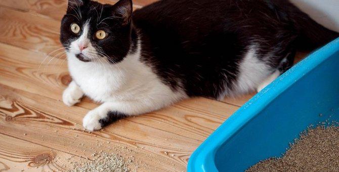 猫トイレの砂が光って見える原因と対処法3つ
