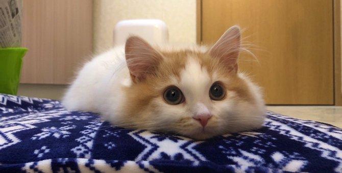 ふわっふわ♡『鬼ほどかわいい問題』を引き起こす子猫さん!