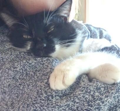 保護猫のぶさかわゴロちゃん、これからも幸せに