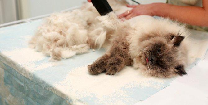 猫に『サマーカット』は必要?メリット・デメリットを解説!