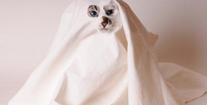 猫は『幽霊が見える』と言われる3つの理由