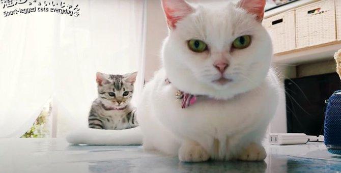 ダメなことはついしたくなっちゃう?先輩猫の真似をする後輩猫!