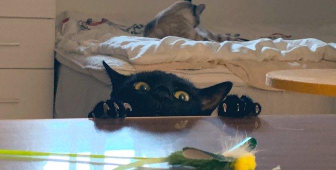 【人気】『ちょ、ちょいと失礼…』机上のおもちゃが欲しい黒猫さん♡