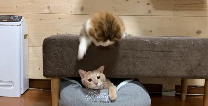 ちょっかいされた猫ちゃんの『怒り方』が最高にかわいらしい♡