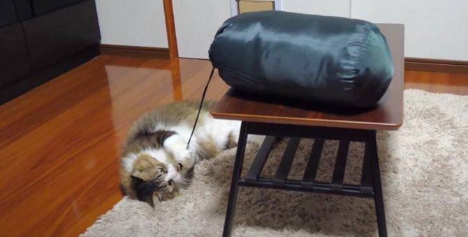 ヒモに夢中な猫ちゃん!遊び方が可愛い♡