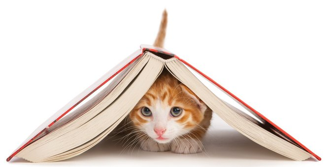 『心のバランスを崩した猫』がする仕草・行動5つ!飼い主がすべき予防策とは?