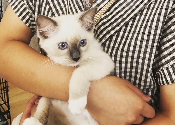 猫が大人しくなる『抱っこの仕方』5つ