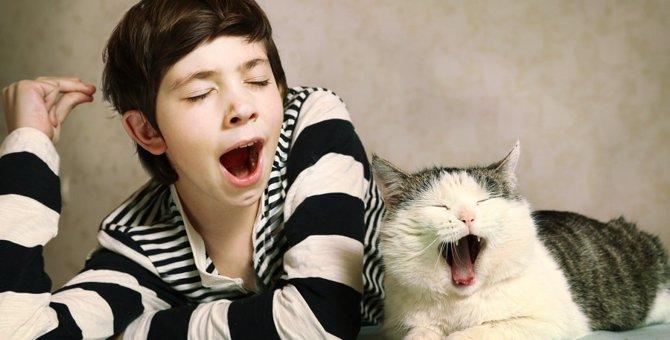 猫があくびに隠された6つの心理と注意する事