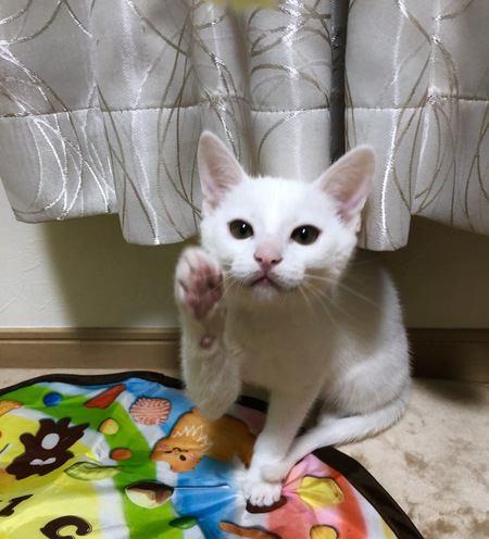 猫は芸を覚えることができる?教え方やコツについて