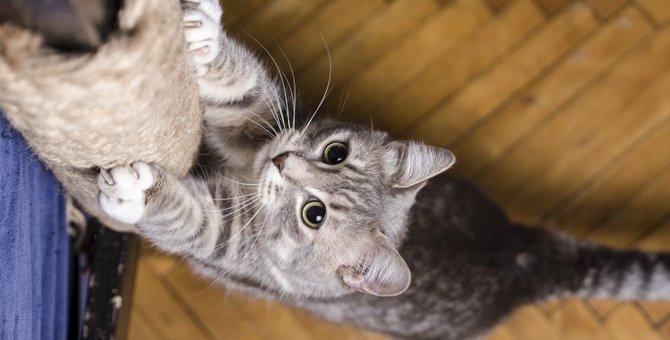 猫の爪とぎでよく被害にあうモノ6つ