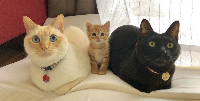 子猫ちゃんの幸せが伝わってくる♡話題の3ショットはほのぼの家族写真風