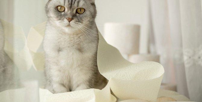 猫が飼い主の『トイレ』についてくる理由4つ