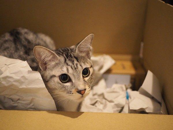 猫に飽きられたときに飼い主が取るべき行動5つ