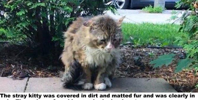 野良猫として過酷な日々を送ってきた猫 保護され別の猫のような顔つきに!