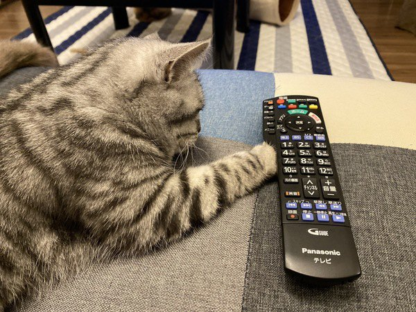 猫にテレビを見せても大丈夫?目や脳への影響は?
