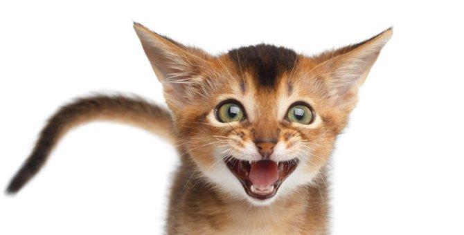 猫がよく鳴くその訳は?善くも悪くも要求なのです!
