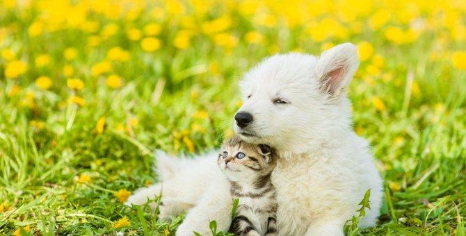 猫と犬で違う所は?歴史や体のつくり、飼い方の違いまで