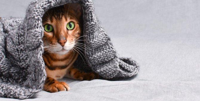 猫の身体についた汚れを簡単に落とす方法3つ