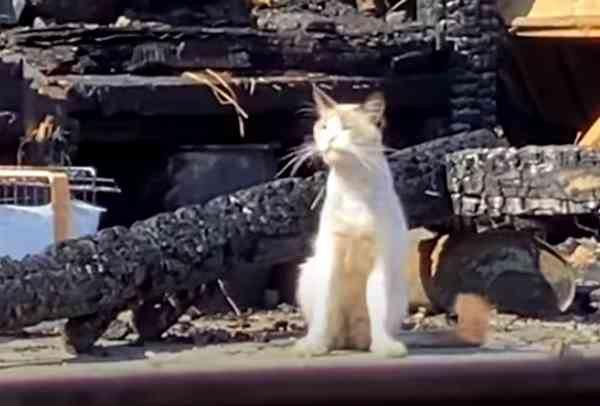 飼い主さんが火事で…残された20匹の猫たちの行方は?vol.2