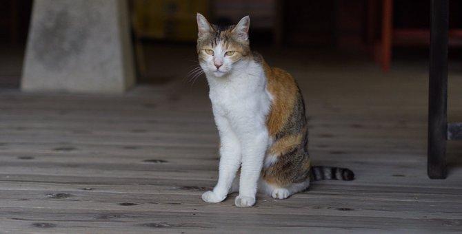 【夏の風物詩】猫が出てくる怪談3選【納涼】