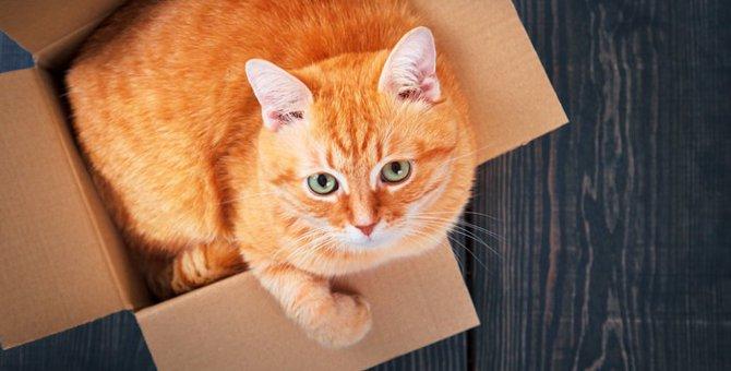 猫がダンボールを好む3つの理由とは