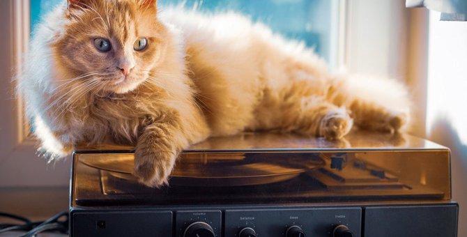 猫が我慢できない飼い主の『悪習慣』3つ