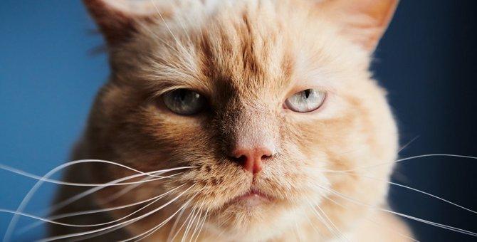 猫が『イライラしている時』の仕草や行動3つ