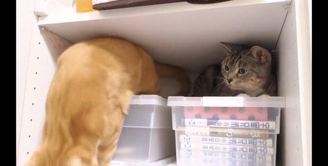お姉ちゃんのそばにいたかった猫ちゃんの表情が切ない