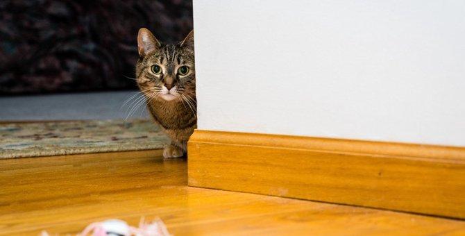 猫に疑われてるかも!?『用心深い猫』がしがちな行動5選